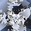Cat In Fractaldesign by Angelica G-N Zizela