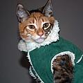 Cat In Patrick's Coat by Tikvah's Hope