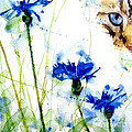 Cat In The Cornflowers by Paul Lovering