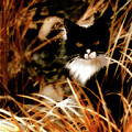 Cat In The Golden Grass by Gothicrow Images