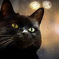 Cat In The Window by Bob Orsillo