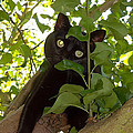 Cat In Tree by Jenny Setchell