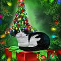 Cat In Xmas Tree Hat by Carol Cavalaris