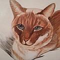 Cat by Irene Peysakh