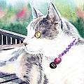 Cat by Irina Sztukowski