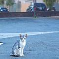cat by Joel Eagan