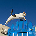 Cat Jumping A Gate by Jean-Louis Klein and Marie-Luce Hubert