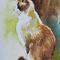White And Brown Cat by Jyotika Shroff