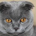 Cat Martin by Sergey Lukashin