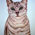 cat by Nadi Sabirova