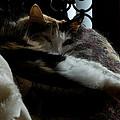 Cat Nap by Michael Walnum
