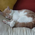 Barn Cat Nap Time by Diane Palmer