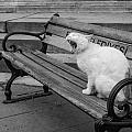 Cat On A Bench by Shirley Radabaugh