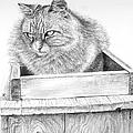 Cat On A Box by Arthur Fix