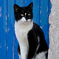 Cat On A Greek Island by Jean-Louis Klein and Marie-Luce Hubert