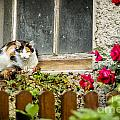 Cat On A Sill by Timothy Hacker