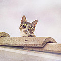 Cat On The Hot Tin Roof by Angela Stanton