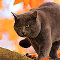 Cat On The Prowl by Lorna R Mills DBA  Lorna Rogers Photography