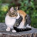 Cat On Tree Trunk by George Atsametakis