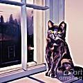 Cat On Window Sill by John Malone