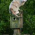 Cat Perched On A Bird House by Jt PhotoDesign