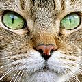 Cat Portrait 1 by Helene U Taylor