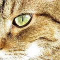 Cat Portrait 2 by Helene U Taylor