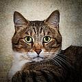 Cat Portrait by Doug Long