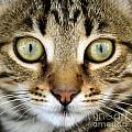 Cat Portrait Macro Shot by Aleksandar Mijatovic