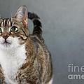 Cat Portrait by Nailia Schwarz