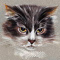 Cat Portrait Yellow Eyes by Daliana Pacuraru