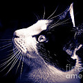 Cat Profile by Cheryl Baxter