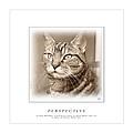 Cat Reflections 1 by Helene U Taylor