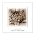 Cat Reflections 2 by Helene U Taylor