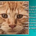 Cat by Sandy Klewicki