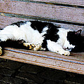 Cat Sleeping On Bench by Susan Savad