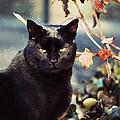 Cat Stevens by Trish Tritz