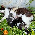 Cat Suckling by Augusta Stylianou