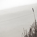Cat Tails In Winter by Jim Vance