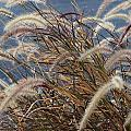 Cat-tails by TJ OHare