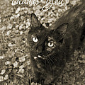 Cat Thank You Cards by Chris Scroggins