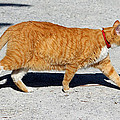 Cat Walk by Cynthia Guinn
