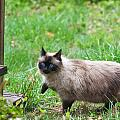 Cat Walking by Melinda Fawver