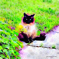 Cat Watching by Donald and Judi Hall
