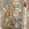 Cat With Bubbles by Jo Collins