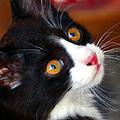 Innocent Kitten by David Lee Thompson