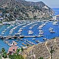 Catalina Harbor by Kelley King