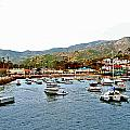 Catalina Island by AR Harrington Photography