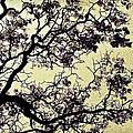 Catalpa Tree Gold by Diana Powell