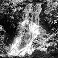 Cataract Falls Smoky Mountains Bw by Cynthia Woods